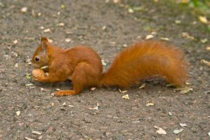 Hungry Squirrel by photo-exile