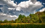 Yellow Flower Field HDR by Creative--Dragon