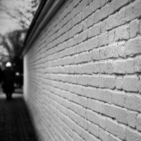 the wall by carrex