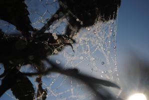 Dropss On Spider Web by LisiTisaKi