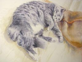 cat's life by milanglo