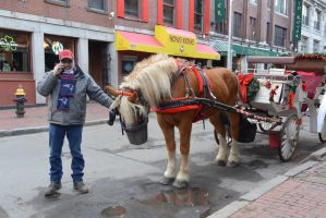 Boston Horse and Carriage Ride, Lunch Time by Miss-Tbones