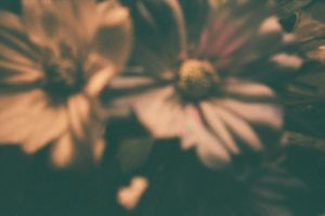 I want your flowers like babies want God's love by MattVoscinar