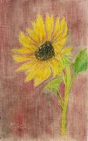 Sunflower by MyriamRockGirl