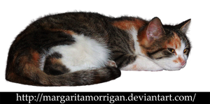 tricolor cat by margarita-morrigan