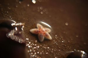Starfish by Tazni