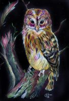 Owl prismacolor by choffman36
