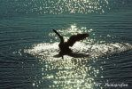 Canadian wild goose in the evening sun by MT-Photografien