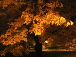 fall night 1 by blueeyedfreak