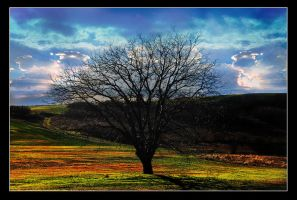 alone and lonely tree by NaViGa7or