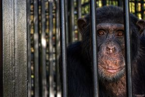 Monkey Jail by DR13agoslav