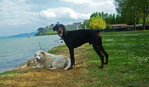 Lovely Dogs by faithandfreedom