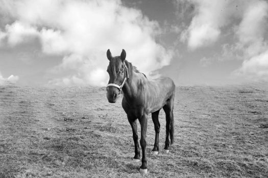 The Horse and the Sky by Hastosa