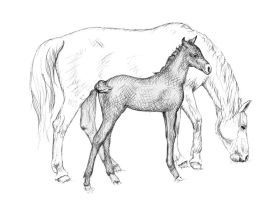 White Horse with Foal by ArtsandDogs