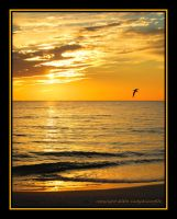Mexico Beach 10-25-08 by LadyAliceofOz