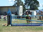 2015 Show Jumping @ TGA NZ by Jean3071