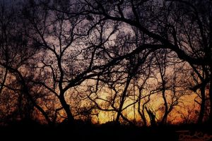 A Sunset Broken By Darkened Trees by JKase911