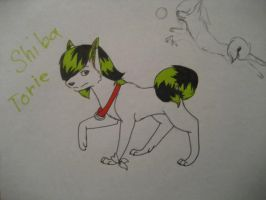 if Torie was a dog... by EchoKitsune