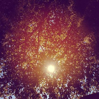 Sun Through Trees by shelbyysmackdown