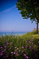 At the sea, under a tree by MiDWaN