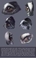 Dog Eye Studies with Notes by KlakKlak