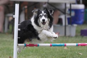 Agility - California - 1 by Deliquesce-Flux
