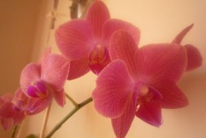 Orquideas by canciondemedianoche