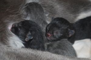 Newborn kittens by bananarama96