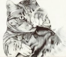 Cat 2 - Ballpoint Pen by icepaw99