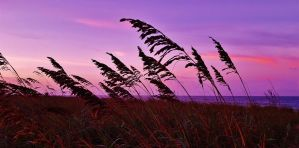 Evening Sea Oats Scene 2016 by Matthew-Beziat