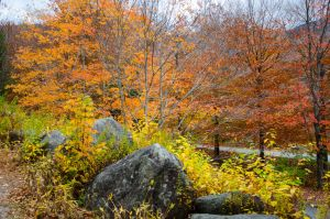 White Mountains  Fall Foliage  100 by FairieGoodMother