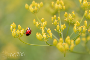 Ladybird by cpg785