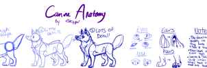 canine anatomy by skipper by meteorcrash