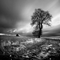 Lonesome Tree - II by Loran31