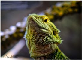 Conceited. by Phototubby
