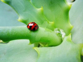 lil lady bug on the aloe plant side view by MidnightsBloom