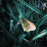5. butterfly or moth? by littleconfusion