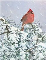 Winter Cardinal by traits