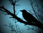 Crow Silhoutte 1 by Barghest1031