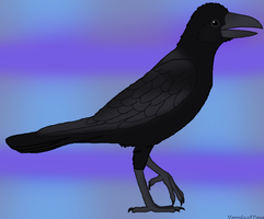Large Billed Crow (2012) by CherrySapphire