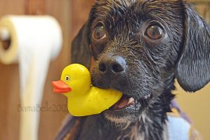 Trampas and His Ducky by BamaBelle2012