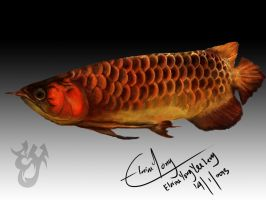 Golden Dragon Fish by ElaineyYong