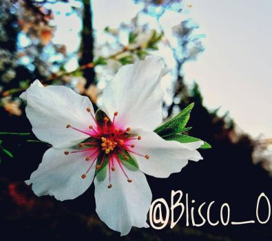 Flower.. by BliscoO