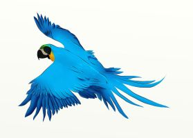 Pirate blue and gold macaw by Lizandre