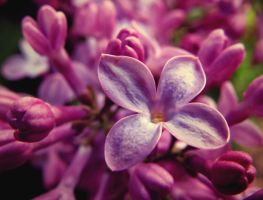 Dreaming of You by cadydid