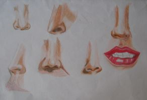 Portrait Practise noses by LadyRafira