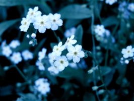 Forget Me Not by angelicque