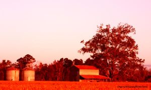 Barn by CherryBlossoms1
