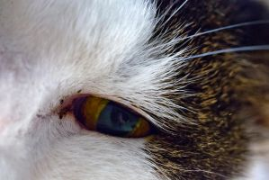 Cat Up and Close EYE by AneurysmGuy