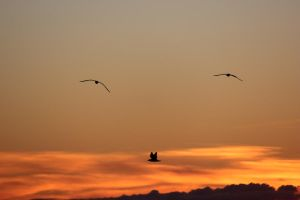 Flying into the sunset #2 by N-ScapePhotography
